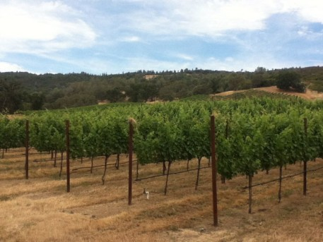 Brassfield Estate Winery vineyards